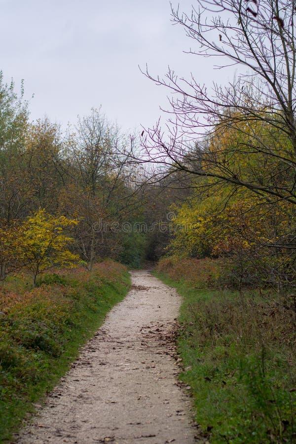 Download Złoty Kolorowy Las W Jesieni Zdjęcie Stock - Obraz złożonej z drewna, złoty: 106903924