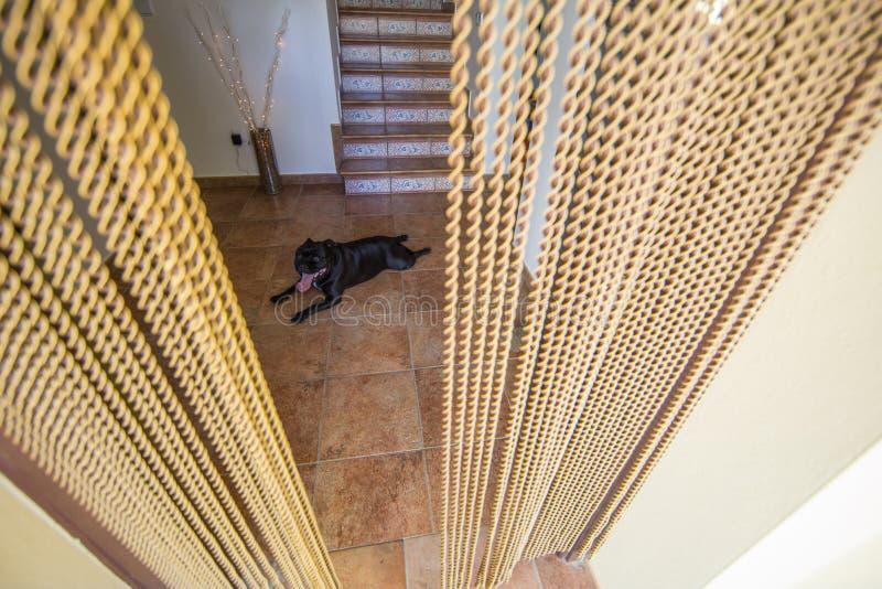 Z paciorkami komarnica zatrzymuje drzwiową zasłonę w Hiszpania zdjęcie royalty free