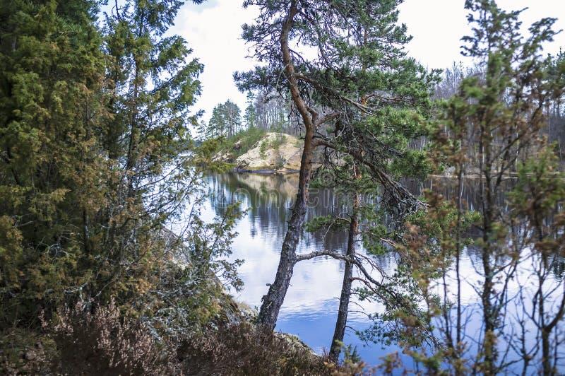 z pewno?ci? malownicza krajobrazu Skalisty brzeg z sosnami i jasnym jeziorem na wiosna dniu, Rosja ladoga Karelia zdjęcie royalty free
