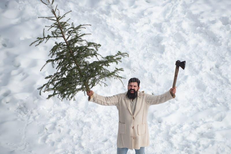 Z podnieceniem Santa modniś z długi brody pozować Modni? ?wi?ty Miko?aj Zakup i dostawa conifer na wigilii obrazy stock