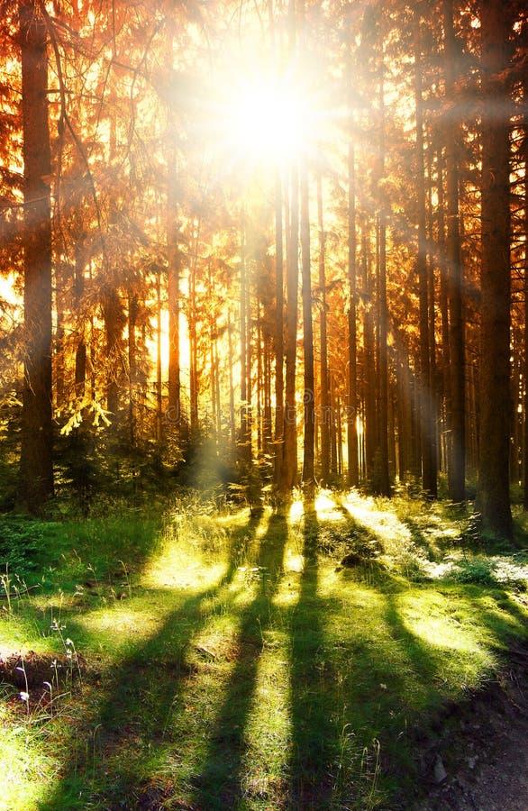 Z słońcem abstrakcjonistyczna lasowa scena zdjęcia royalty free