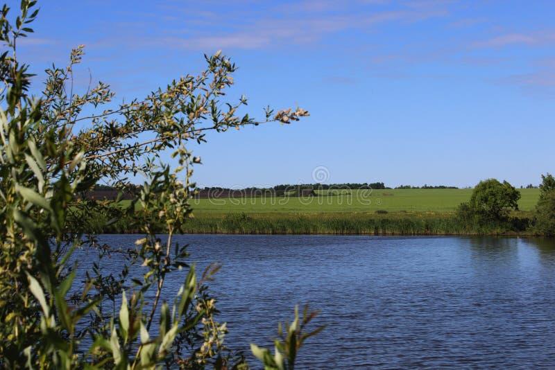 Z stawem lato krajobraz fotografia stock