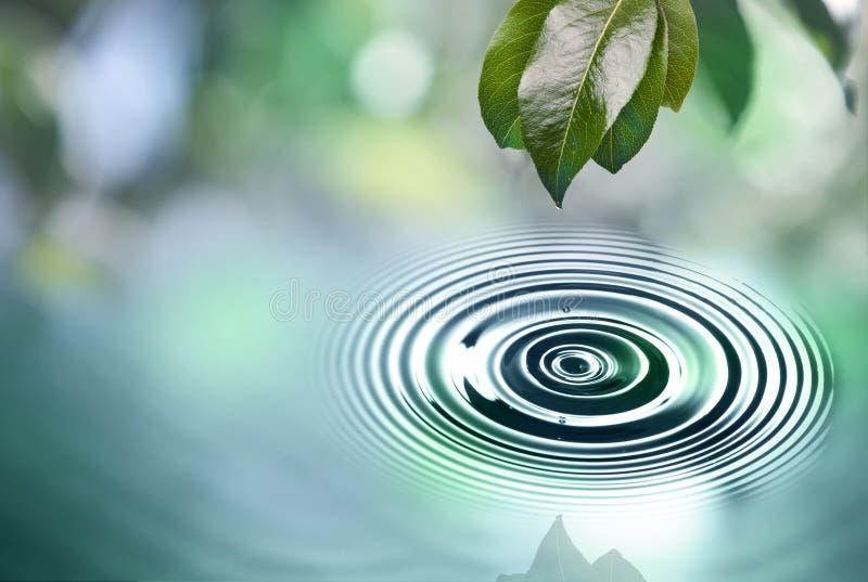 Z wody kroplą zieleń liść zdjęcia royalty free