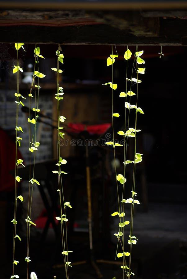 zaświeca rośliny reversible obraz royalty free