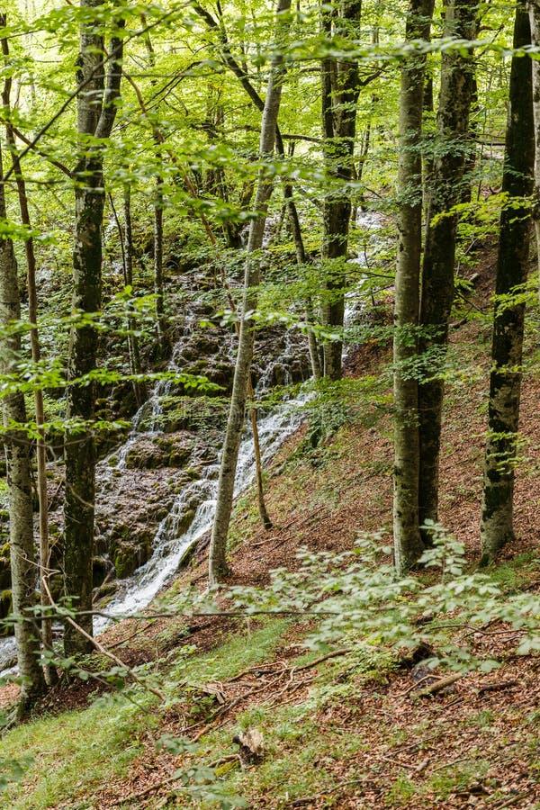 Zaświecający las w natura parku w lecie zdjęcia royalty free
