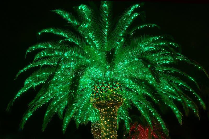 Zaświecający Plenerowy Bożenarodzeniowy drzewko palmowe obraz royalty free