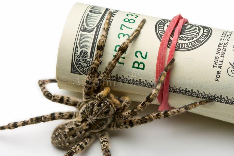 za dolarów makro- rolki pająkiem zdjęcie stock
