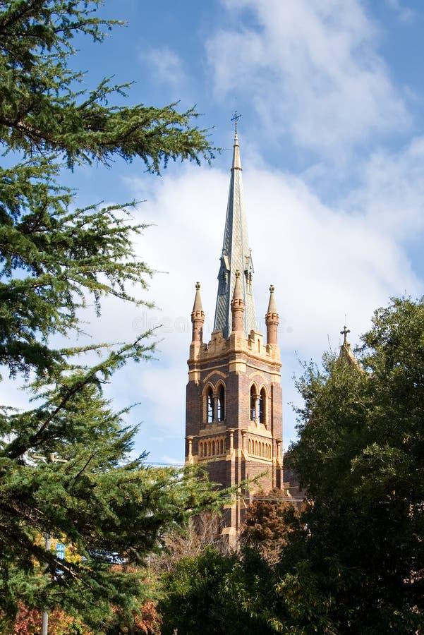 za katedralnymi drzewami zdjęcia royalty free