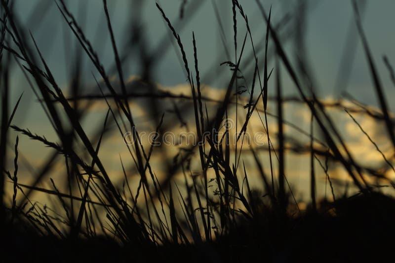 za sosnowymi stałego sunset drzewa dwa lata zdjęcie royalty free