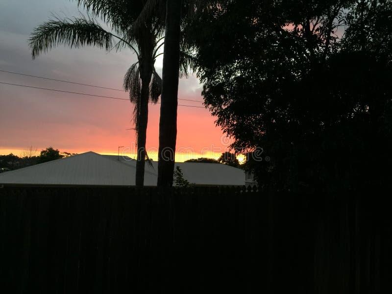 za sosnowymi sta?ego sunset drzewa dwa lata obraz royalty free