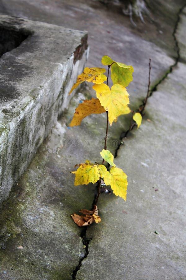 Zaad het groeien door barst in het concept van de bestratingsecologie Het toenemen spruit op droge grond royalty-vrije stock afbeelding