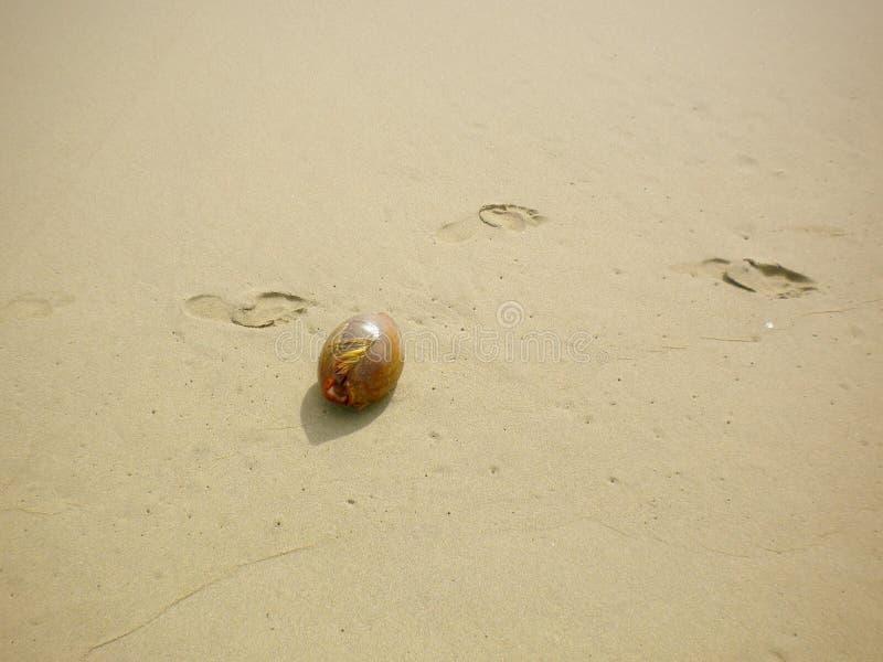Zaad op het strand stock fotografie