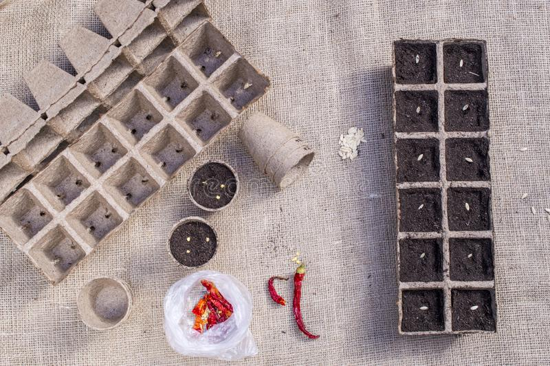 Zaad zaaien, die zaad van tuininstallaties planten royalty-vrije stock afbeeldingen
