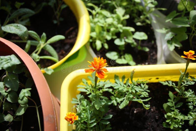 zaailingen en bloemen in potten stock afbeeldingen