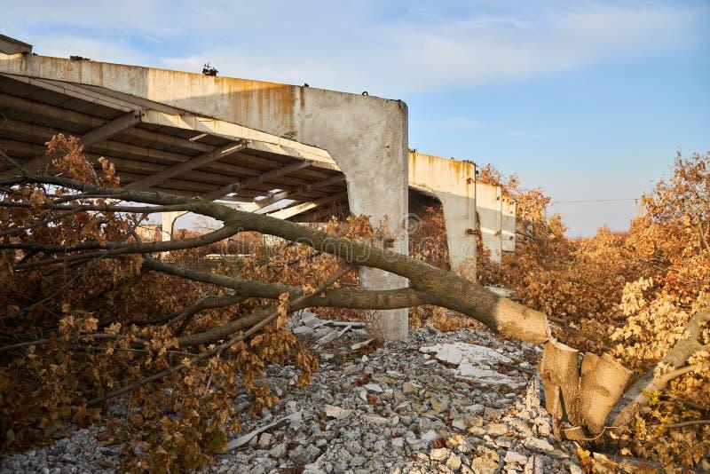 Zaainboom in de buurt van de vernielde versterkte betonbouw van een veehouderij royalty-vrije stock afbeelding