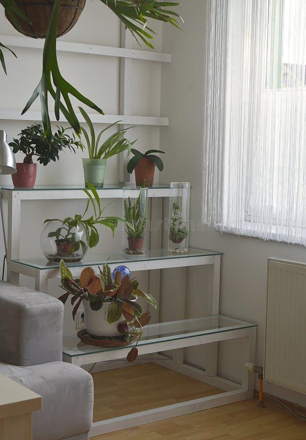 Zaal bloemen op de plank in het binnenland royalty-vrije stock foto