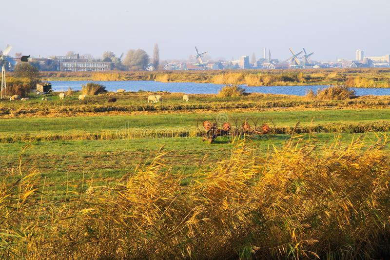 View over rural landscape with crop field, river and sheep on windmills and skyline of dutch city stock photography