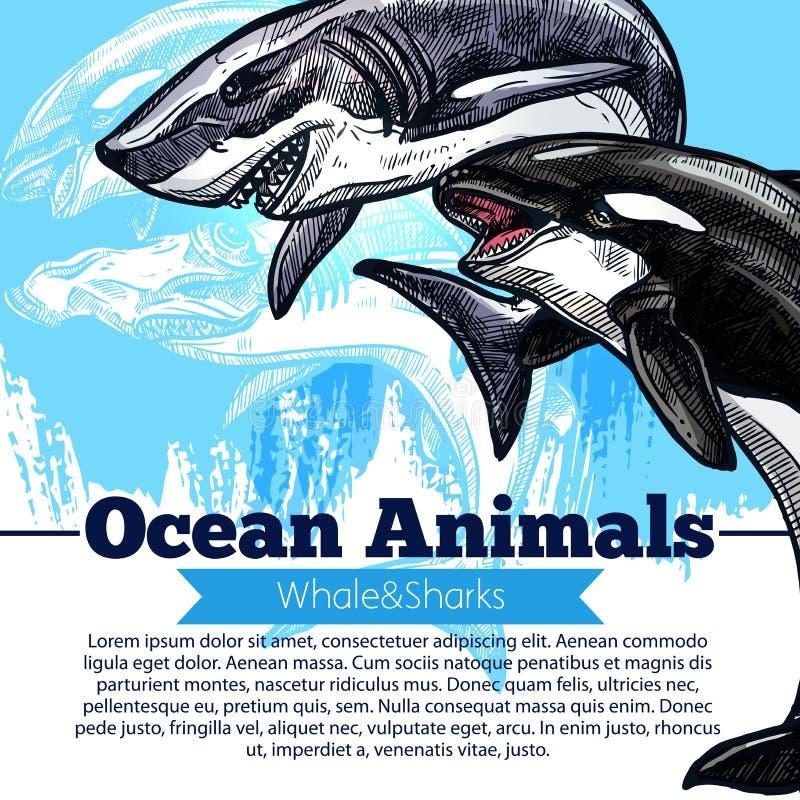 Zabójcy wieloryb lub rybi wektorowy plakat orki i rekinu ilustracji