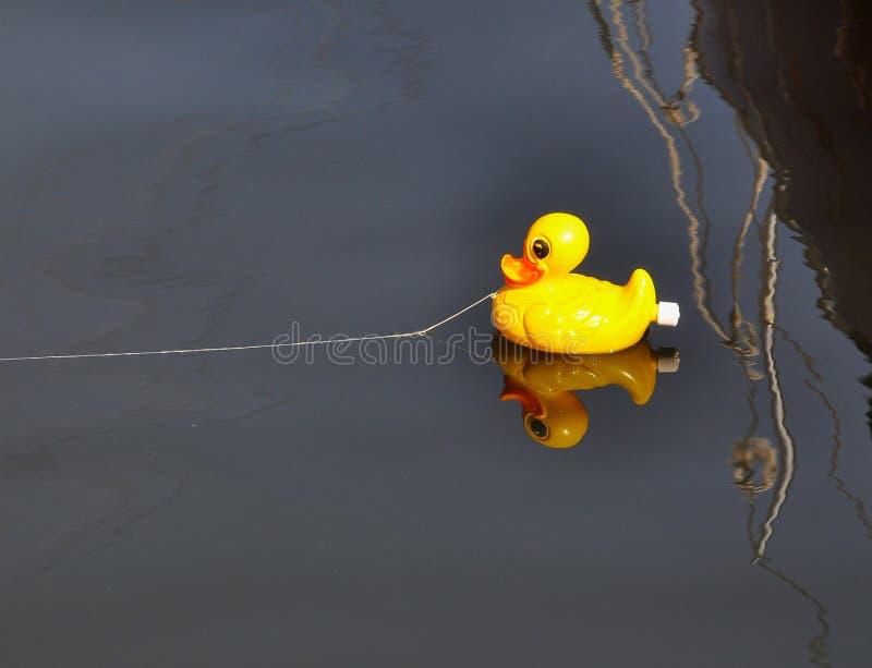 Zabawa, spławowej kolor żółty zabawki gumowa kaczka pętająca w schronieniu obraz stock