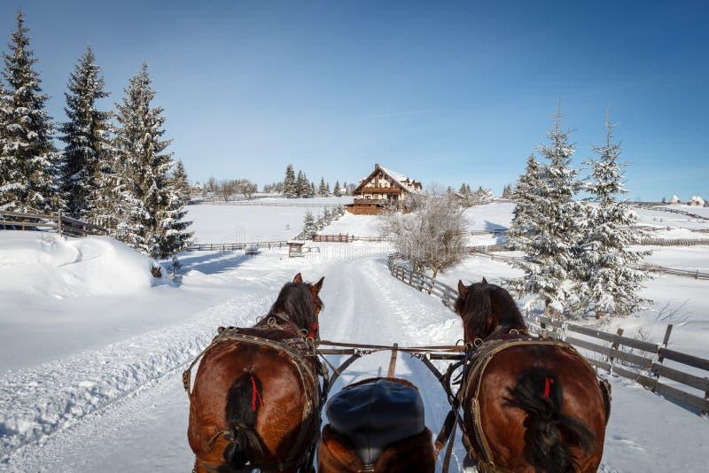 zabawnie kierowcy sledge zimy obraz stock