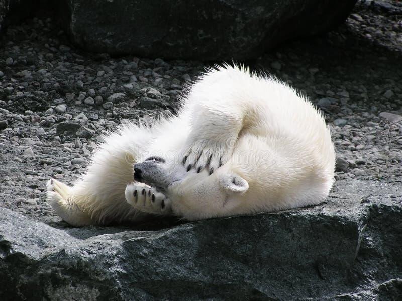 Zabawnie niedźwiedzi ma polarny