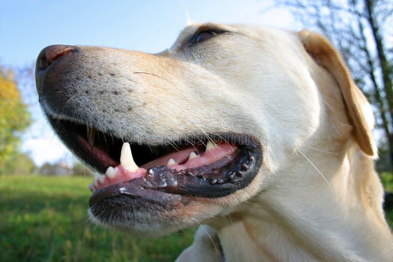 zabawny pies zdjęcia royalty free