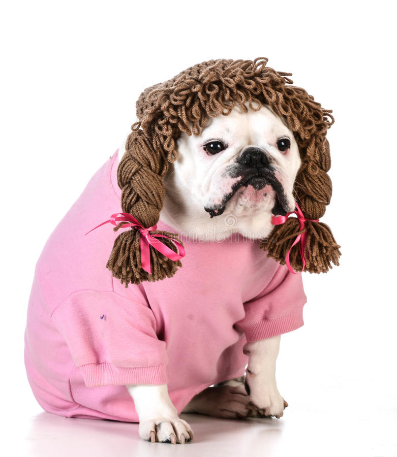 zabawny pies obrazy royalty free