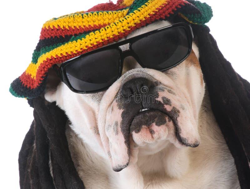 zabawny pies zdjęcia stock