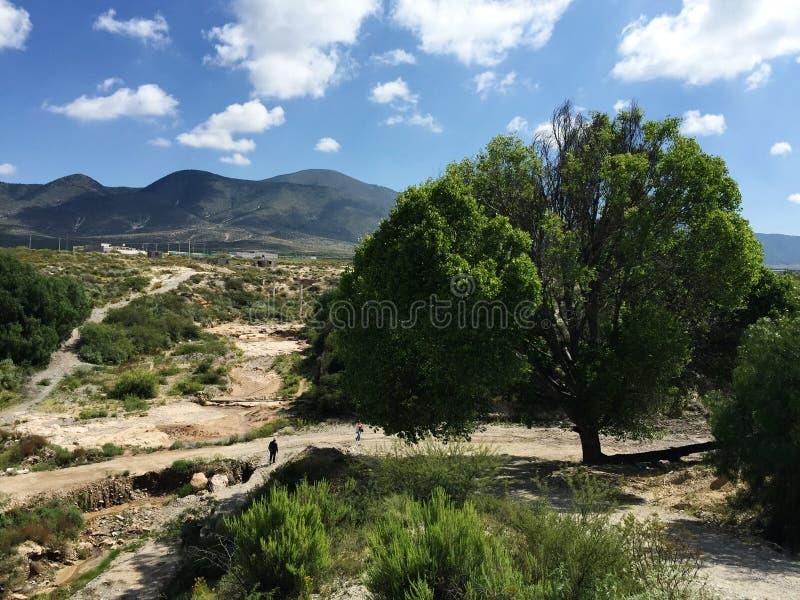 Zacatecas-Natur stockbilder