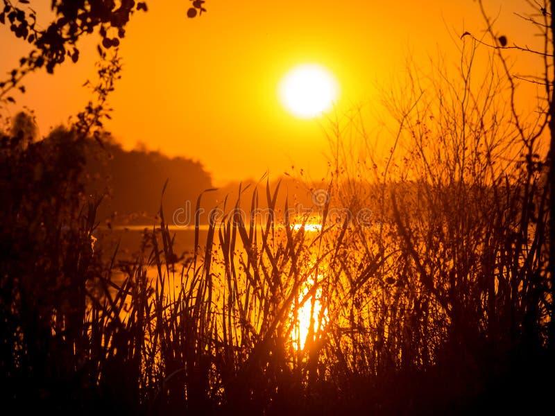 zachód słońca nad rzeką Sylwetki drzewa i trawa podczas sunset_ fotografia royalty free