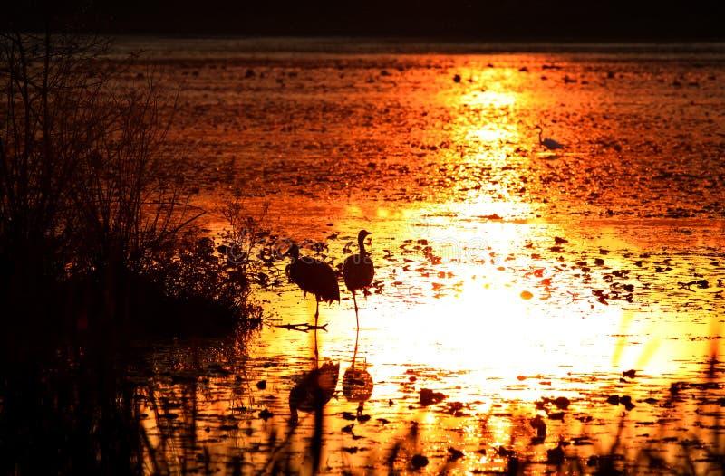 zachód słońca nad jezioro michigan zdjęcie stock