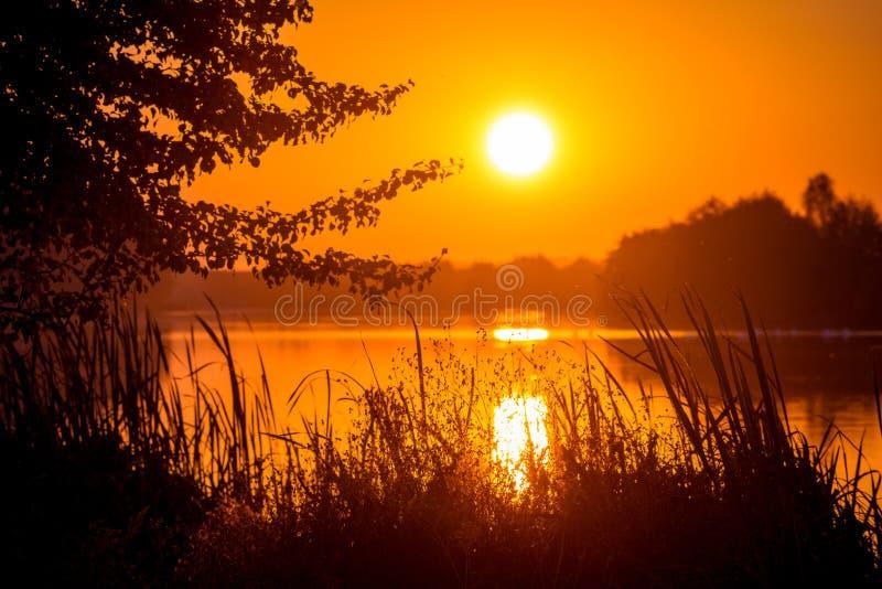 zachód słońca nad rzeką Sylwetki drzewa i trawa na tle rzeka w evening_ obraz stock