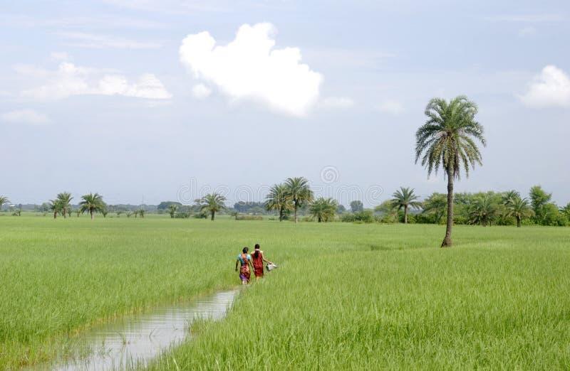Zachodni Bengalia rolnictwo zdjęcie royalty free