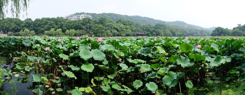 Zachodni Hangzhou Jezioro obrazy stock