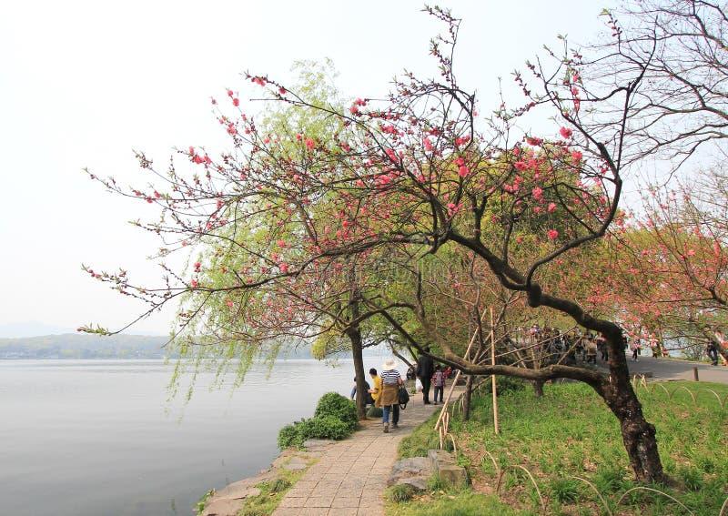 Zachodni jezioro w Hangzhou, porcelana zdjęcie royalty free