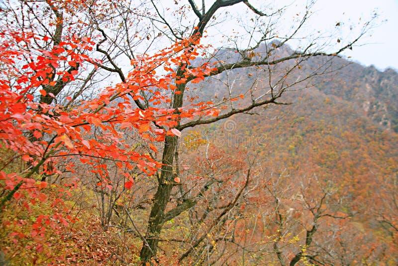 Zachodni Taishan, Ruyang zdjęcie stock