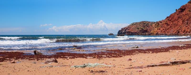 Zachodnia Algarve plaża, zanieczyszczenie z brąz algą obraz royalty free