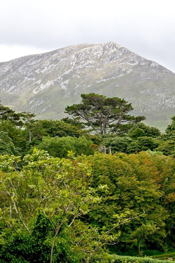 Zachodnie wybrzeże Irlandia zdjęcie royalty free