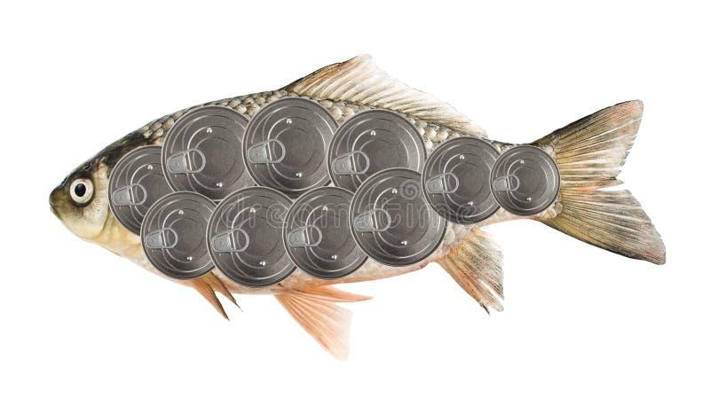 zachowanie ryb obraz stock