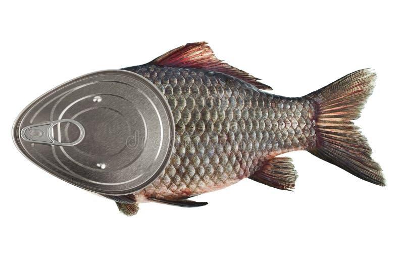 zachowanie ryb zdjęcie royalty free