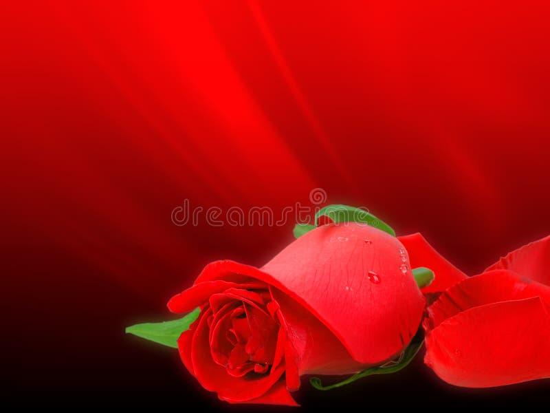 Zacht-lichte rood nam op bokehachtergrond toe royalty-vrije stock afbeelding