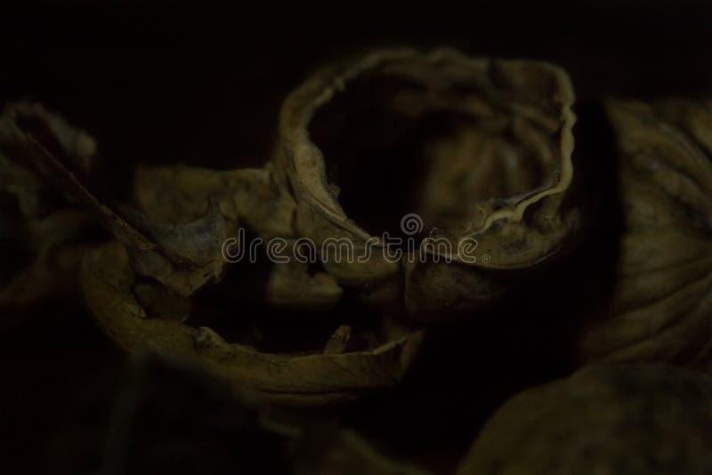 Zacht nadrukbeeld van een grote lege okkernootshell stapel in de duisternis royalty-vrije stock foto