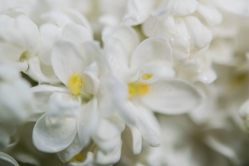 Zachte backgriund met bloemen royalty-vrije stock foto