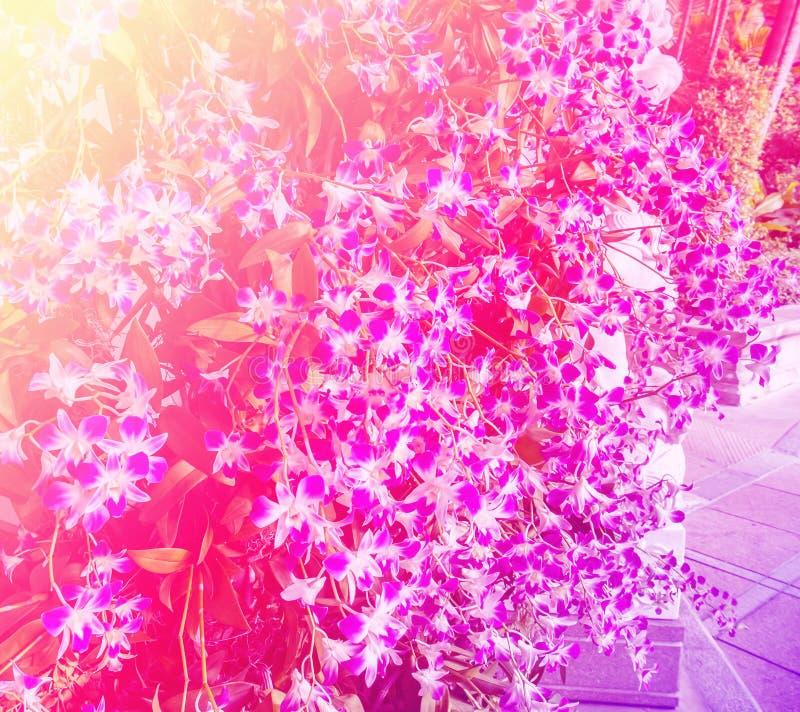 Zachte die Nadrukkleur van Mooie Orchideebloemen wordt gefiltreerd met Bladeren stock afbeelding