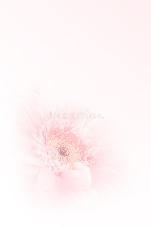 Zachte geconcentreerde Gerbera-bloem stock afbeelding
