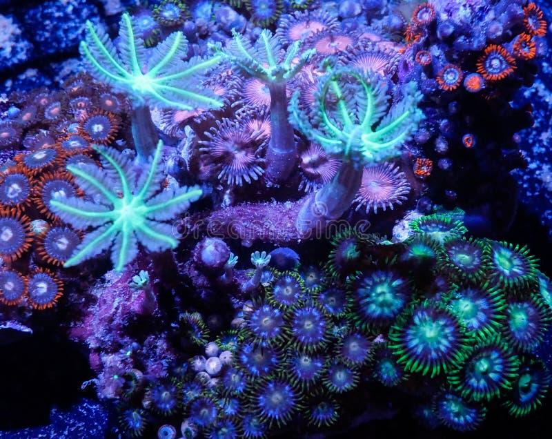 Zachte koralen stock fotografie