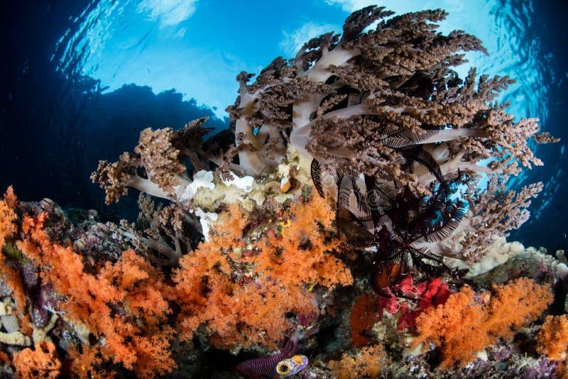 Zachte Koralen die in de Tropische Stille Oceaan groeien royalty-vrije stock foto