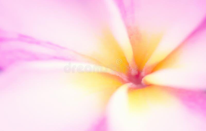 Download Zachte Mooie Stuifmeelbloem Stock Foto - Afbeelding bestaande uit romantisch, kleurrijk: 114227066