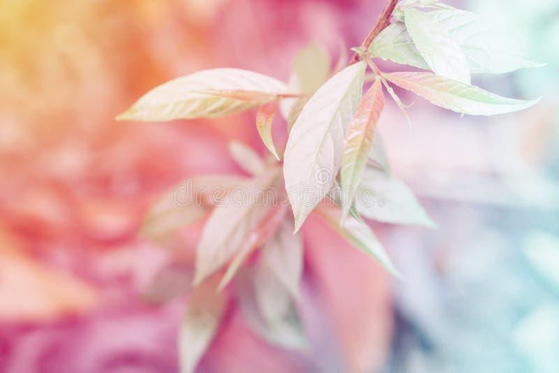 Zachte nadruk groene bladeren met het effect van de pastelkleurfilter abstrac royalty-vrije stock foto's