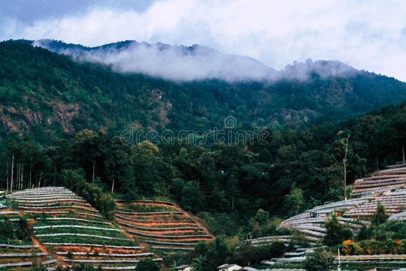 Zachte nadruk Mistige ochtend op de berg, Doi Inthanon northernmost van Siam, Chiang Mai, Thailand stock fotografie